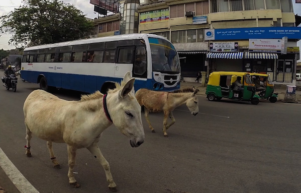 Donkey Traffic in India